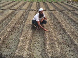 Salt farm foundation's result