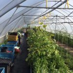 Greenhouse - Location De Petten